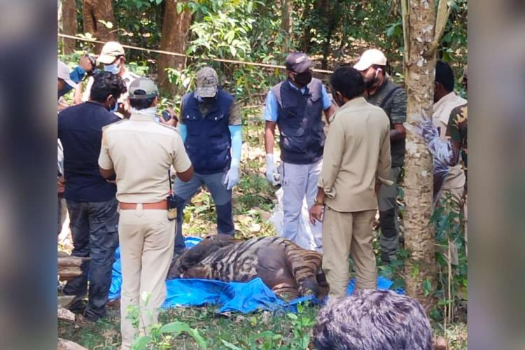 Kodagu tiger carcass found in the forest by officials
