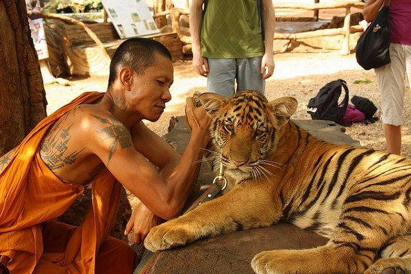 Good riddance to Thailands infamous tiger temple