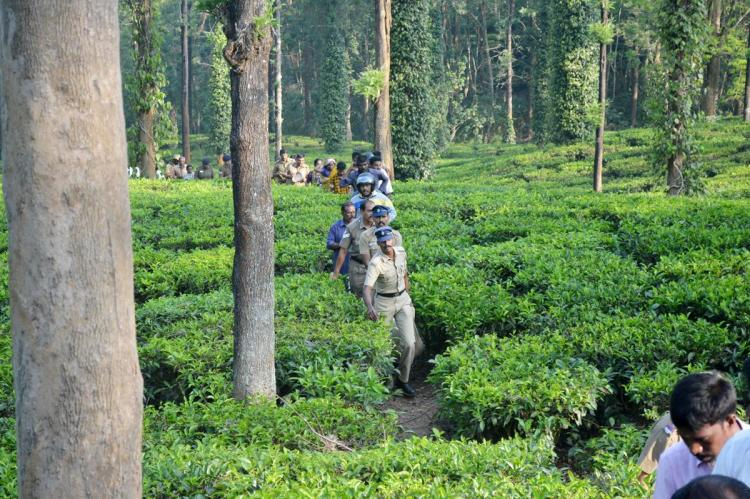 Tea estate worker mauled to death by tiger near Ooty