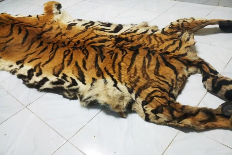 five held for trying to smuggle tiger skin in telangana s adilabad