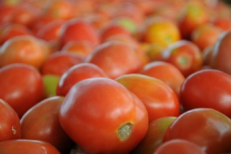 Tomato prices soar in Telangana a kilo sold for a staggering Rs 140