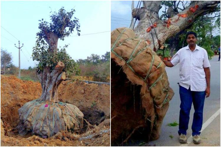 Dont cut trees just move them instead this Hyderabad man shows you how