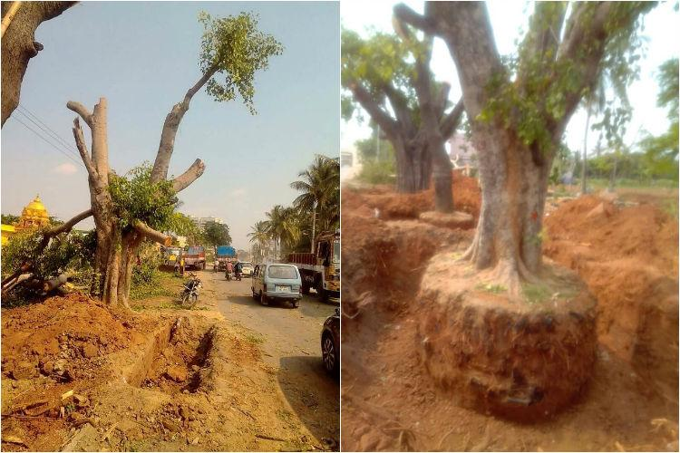 Good Samaritans Bluru residents pull off crowdfunding campaign to save trees from being axed