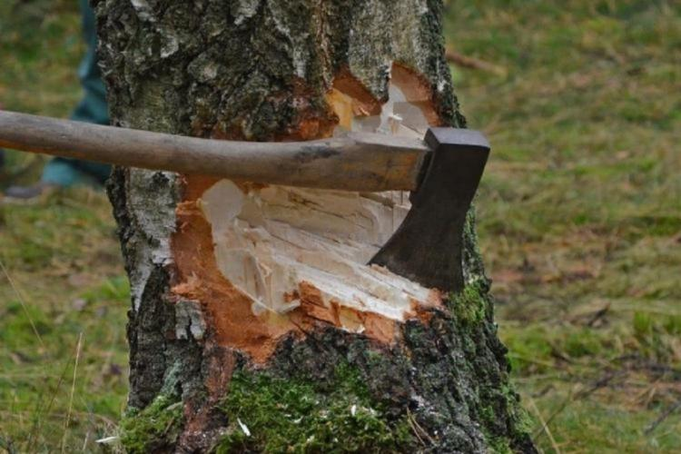 trees cutting by using axe
