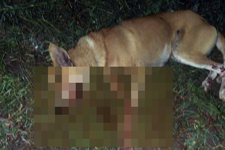 Two dogs brutally killed in TN after crude bomb trap kept for jackals explodes