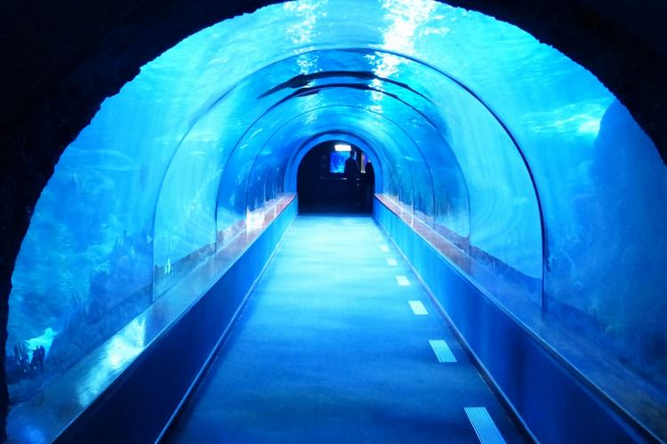 Andhra capital Amaravati to have Indias first underwater tunnel for vehicles