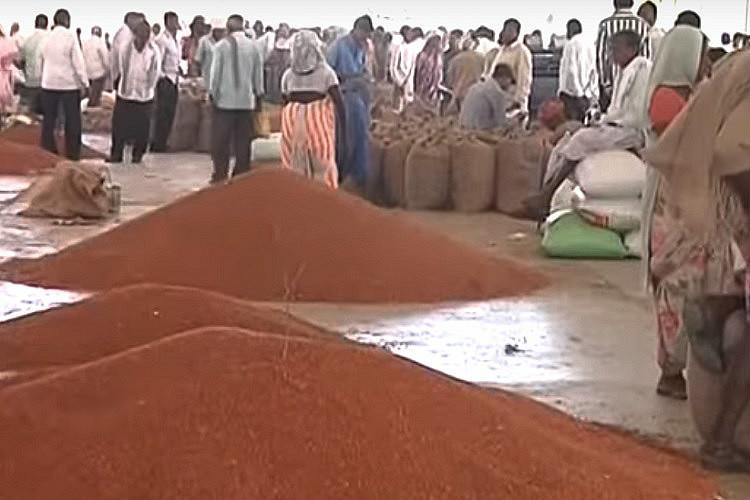 Telanganas tur dal farmers face yet another uncertain season