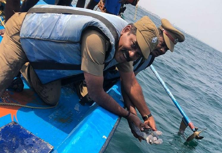 How volunteers the forest dept and fishermen saved a juvenile olive ridley turtle in Chennai