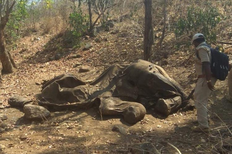 Tusker killed by poachers in Karnataka body wasnt discovered for two weeks