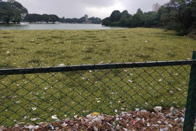Ulsoor lake covered in weed