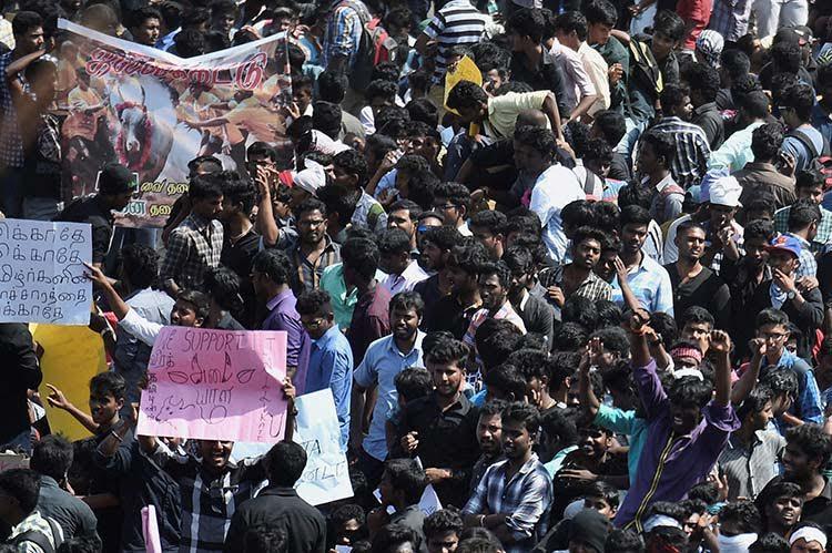 Despite assurance from OPS Jallikattu protestors refuse to leave till event is held