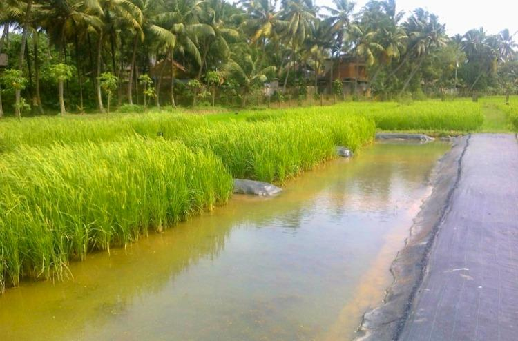 This government research centre in Kerala is helping keep alive a traditional harvest ritual