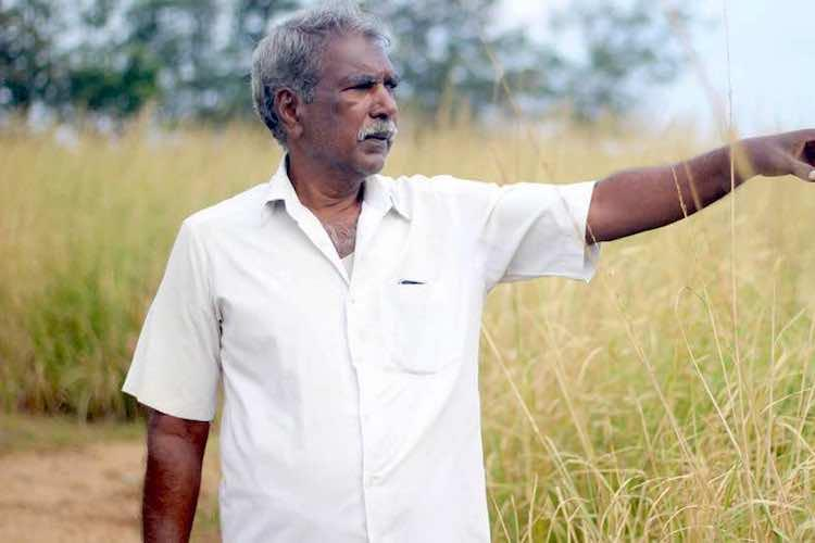 How coastal farmers in TN Puducherry are harvesting riches with hardy vetiver grass