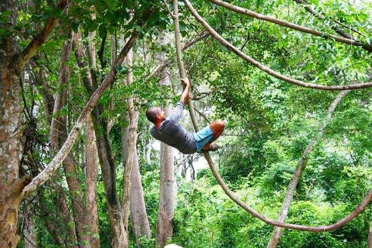 Meet Vijo Varghese a Malayali eco-warrior living in the jungles of Thailand