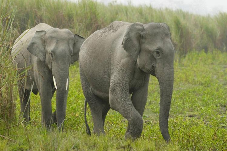 Elephant inVisakhapatnam zoo causes mild panic after running amok in enclosure