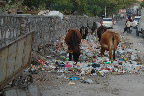 Why Does Kerala Not Have Garbage Bins On Its Roads To