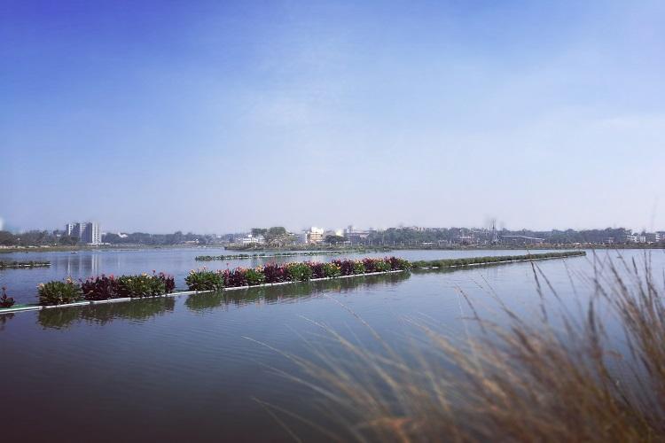 Bengaluru lake enters record books for largest floating island post rejuvenation