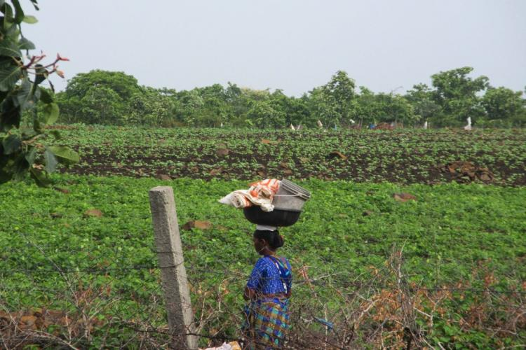 A woman farmer in Telangana sets off to her agricultural field