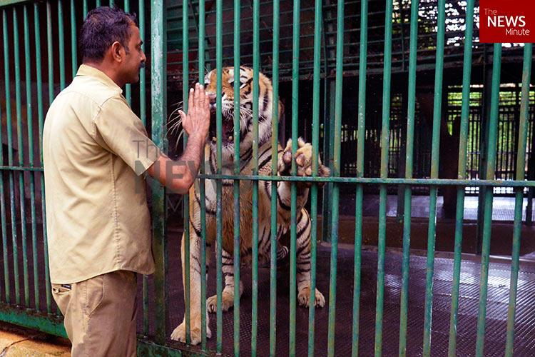 Of snarls and scratches Stories from zookeepers who care for dangerous beasts