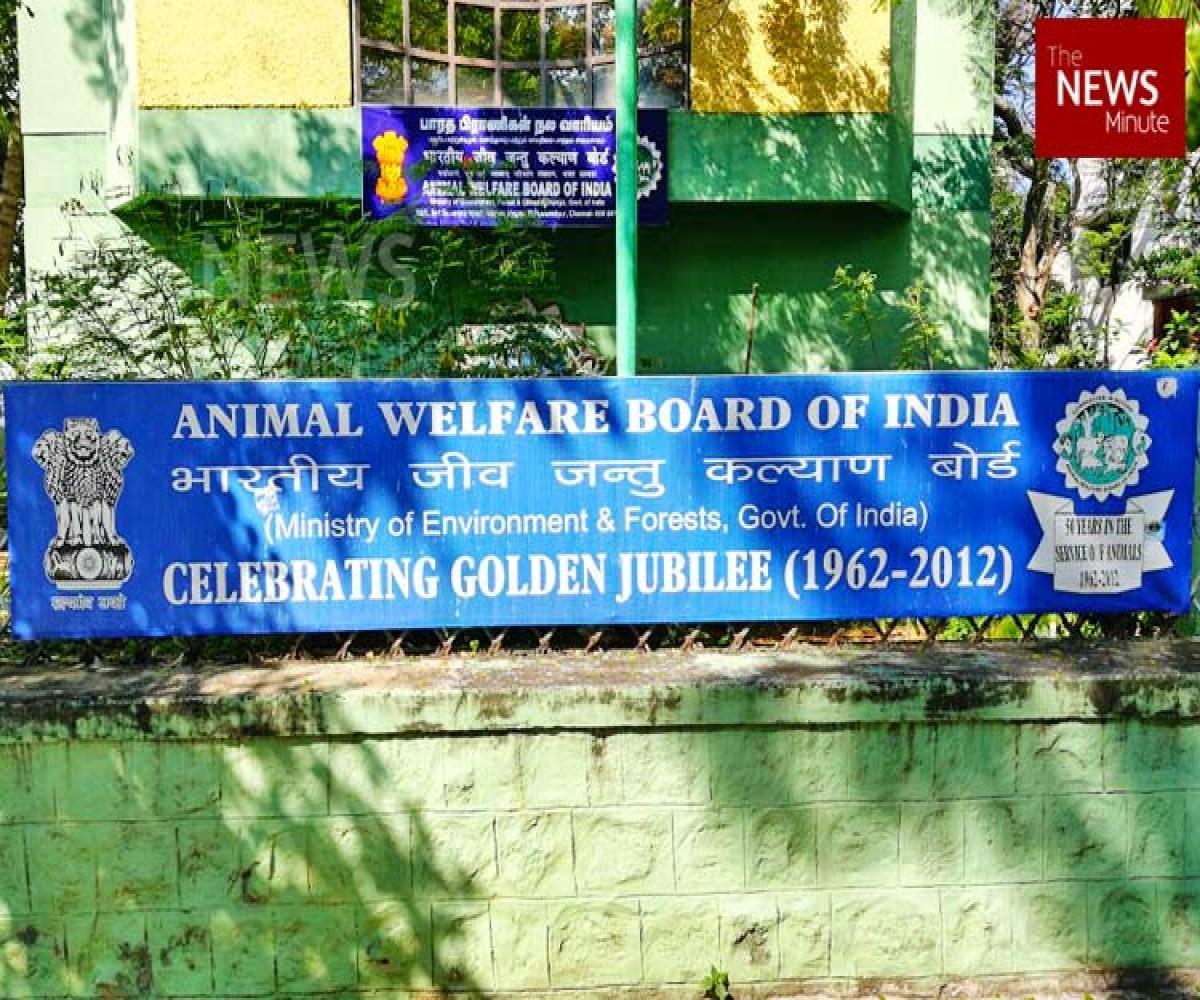 Goodbye, Chennai: Animal Welfare Board announces setting up