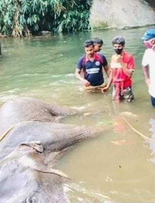 Kerala elephant death: SIT to probe killing, 1 person detained