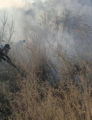 Telangana reports forest fires for seven days, officials say many are manmade
