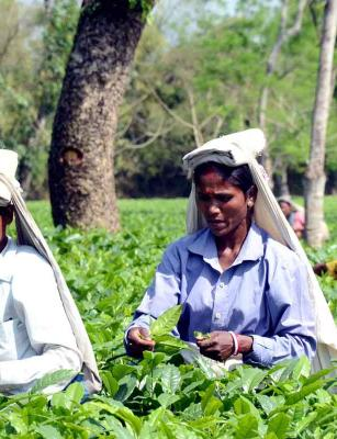 Generation after generation, why Kerala's plantation workers don't have their own homes