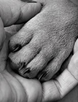 Bengaluru animal hospital Cessna seeks donations to treat pets in need