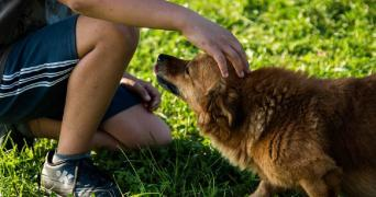 A person kneeling on grass, petting a dog