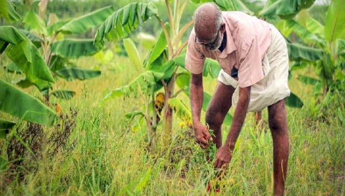 How resilient food forests are helping farmers in India to improve productivity