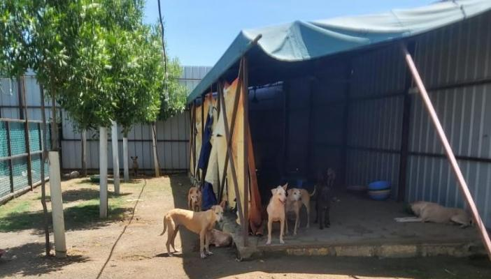 Stray dogs kept captive at IIT-M campus