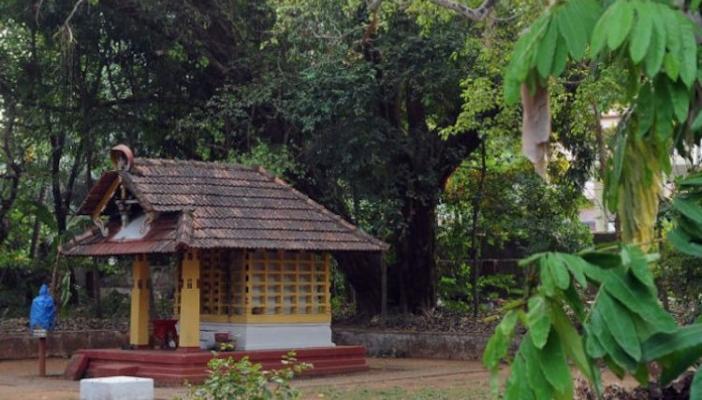 Sacred groves of north Kerala The last refuge for biodiversity