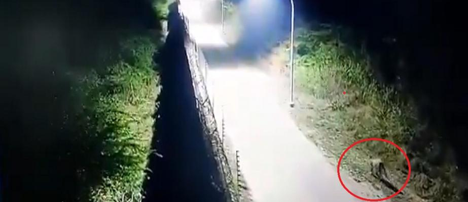 Hyderabad airport's CCTV camera shows leopard walking near its wall