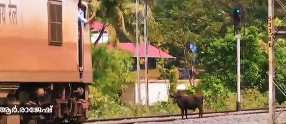 A loco pilot halted a train to save two cows: Kindness captured on camera
